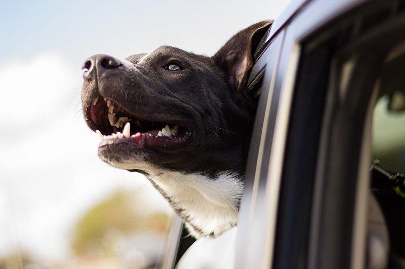 Pies podczas kursu taryfą